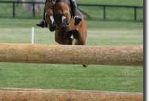 Horse Sense / Three Day Eventing and all the pretty horses / by Edy Rameika