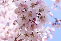 Flores! Belleza de la Naturaleza!
