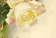roses &roses again