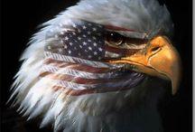 Eagles & Hawks / by Dolores Brihn