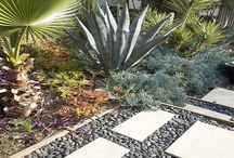 Drought Tolerant Landscaping / Drought tolerant landscaping can provide you a beautiful outdoor and landscape design to the area affected from droughts or having less availability of water.