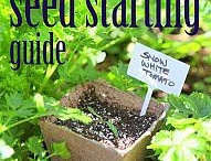 Seeds, seed germination & plant division / Seeds, seed germination and perennial plant division