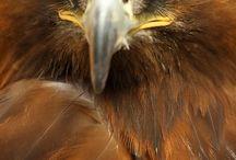 I AM AN EAGLE.  LEAP
