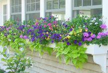 Garden / ideas for garden