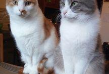 gatti / creature perfette
