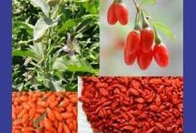 Gardening - Plants, Seeds & Bulbs