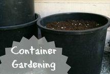 Outdoor: Container Gardens