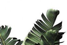 Cuadros Verdes