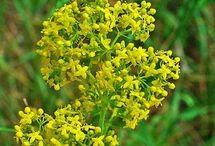 Plante, seminte si uleiuri medicinale
