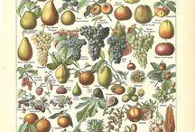 Botanic posters