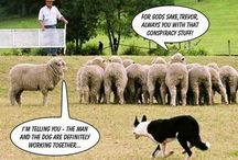 Animal Humor / by Gilly