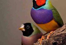 Gould vogeltjes / by Esther Kloddertje verf