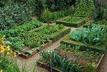 Veteményes kert