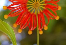 Flors curioses