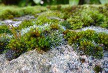 Moss-fest...