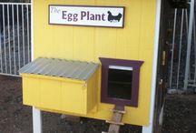 Chicken coop fun