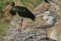7 rzadkich ptaków GPN-u