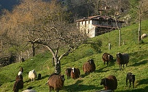 Hotel Posada del Valle Asturias / Small hotel in Asturias Northern Spain surrounded by its own organic farm