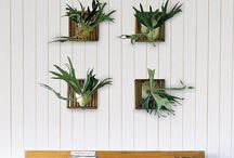 Houseplant Haven / by Kelly Canales