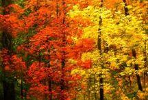podzim - les