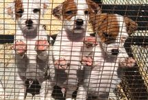 Cuccioli / Cani splendidi amici