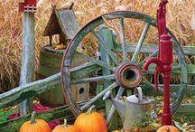 Seasons. / by Carly Pardy