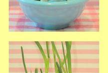 Plants & Gardening / 0