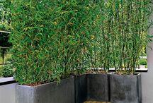Bamboul