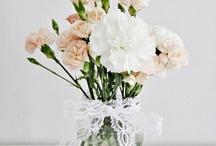 Carnation. dianthus