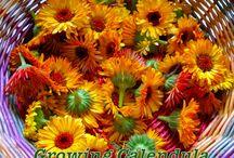 Edible flowers / Flowers
