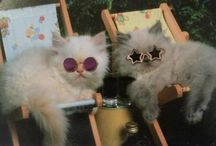 |cats