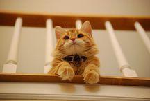Cats / by Kotaro K.