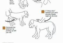 dog - pies