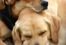 Mascotas y demás / Los mejores amigos más cerca que nunca.