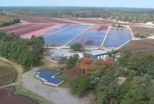 """Edgewood Bogs / For over 70 years, our family has been harvesting cranberries in Southeastern Massachusetts, the heart of """"Cranberry Country """".  We select only the ripest, freshest fruit to package for you and are proud to provide you with a      premium quality product.  From flower to package we are striving to integrate all the latest sustainable technologies and pledging  to do our share in protecting the   environment."""