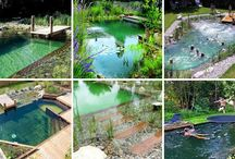Backyard natural pool