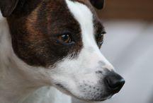 Dogs / by Tammi Cisler