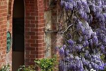 wisteria / by Mary Talton