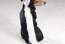 Cute doggy Halloween or holiday costumes