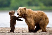 интересное о животных