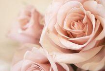 Flores ❤️