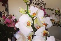 iFleur Laboratorio dei fiori / Flower shop in Italy