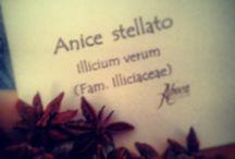 Herbae Volant, Fructus Manent