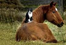 ANIMALS NEED HOMES
