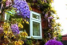 flowering walls