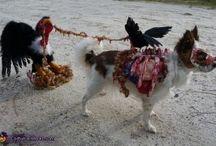 Cachorritos enmascarados. / Selección de los cachoritos disfrazados con más estilo.