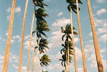 Palm Trees / Palm trees / by Renee Johnson