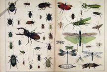 Entomology / by Alys Power Design