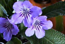kukkassi