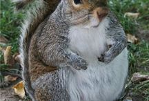 Squirrels / by Samantha Mostek